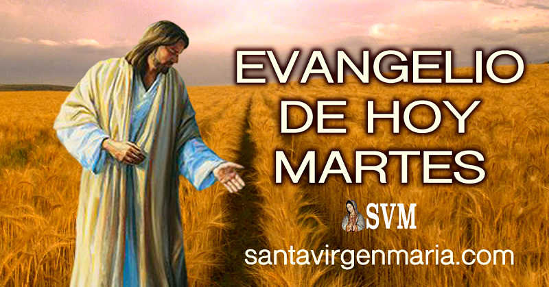 Evangelio San Mateo 13 36-43 CATOLICO